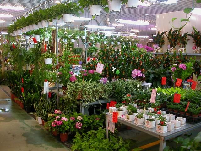 第一次購買盆栽就上手 - 盆花界線